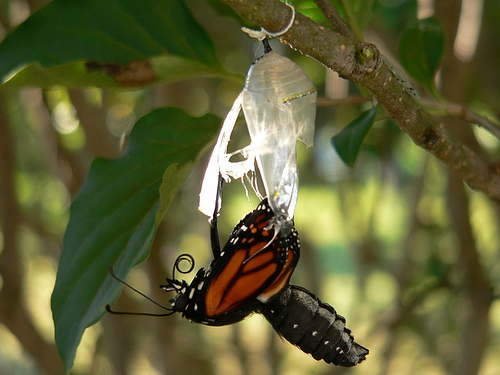 out of cocoon