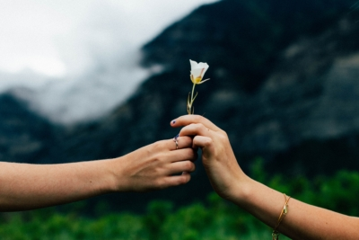 hands giving flower